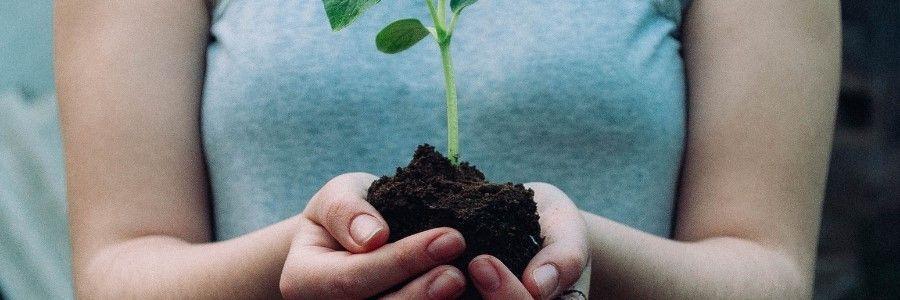 boom planten natuur activiteiten lente
