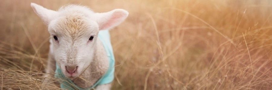 jonge dieren kijken activiteiten voorjaar